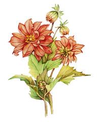 Watercolor with Dahlia