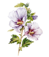 Watercolor with hibiscus