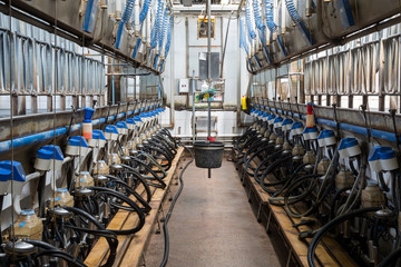 Equpment with milking machines on dairy farm