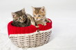 Wicker basket with two little kittens