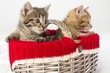 Two small kittens in a wicker basket