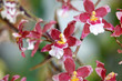 Beautiful red Orchid flowers close up