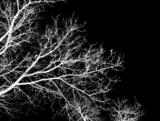 bare tree branches on a black background