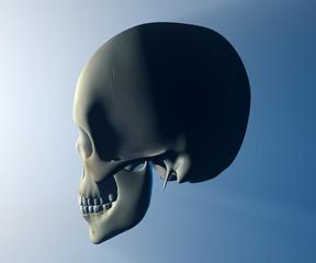Cranio testa profilo anatomia
