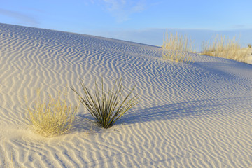 Patterns in White Sand