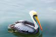 Pelicans on Ballestas Islands,Peru  South America in Paracas