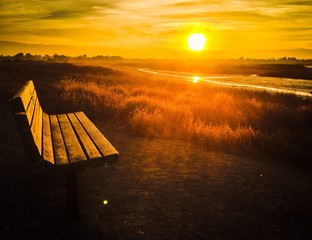 lone bench bathing in the sun rays