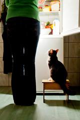 Cat stool and fridge
