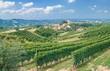 Weinlandschaft in der Langhe im Piemont nahe Asti