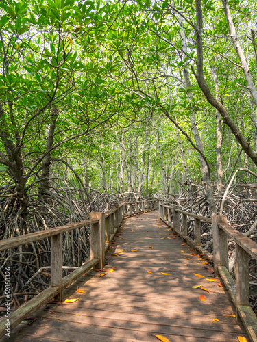 droga-w-lesie-mangrowe
