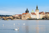 Cityscape of Prague with the Charles Bridge and Swans