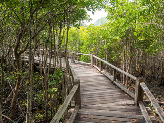 Pathway in the forest mangrove
