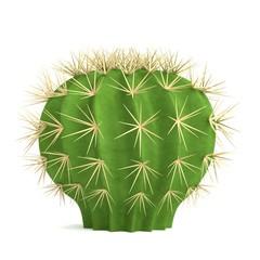 realistic 3d render of cactus