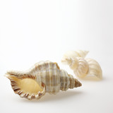 seashells on white