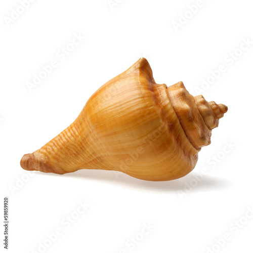 seashell isolated