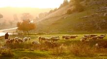 "Постер, картина, фотообои ""Shepherd herding sheep at sunrise"""