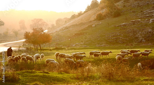 Leinwanddruck Bild shepherd