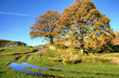 Two trees in an autumn landscape