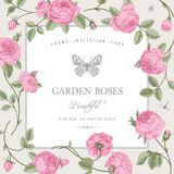 Vintage vector card with beautiful pink garden roses