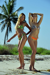 Bikini models posing in front of palm tree at tropical beach