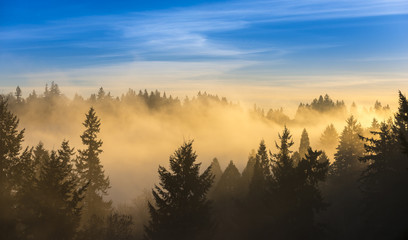 Thick fog over trees and blue sky