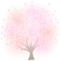 ふんわり桜