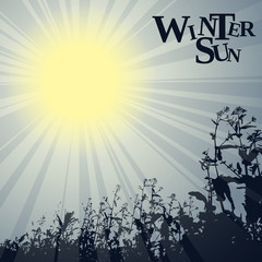 winter sun theme