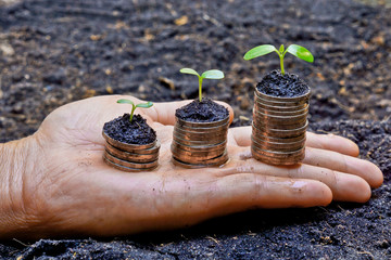 hands holding tress growing on coins / csr