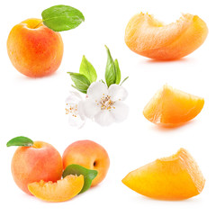 Collection of apricot fruits and flowers, isolated on white