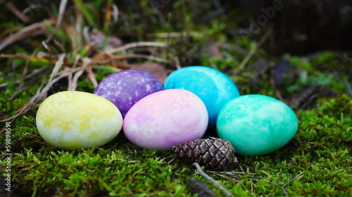 Easter eggs in different colors on moss in forest