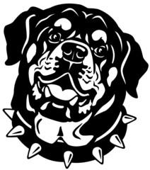 rottweiler head black white