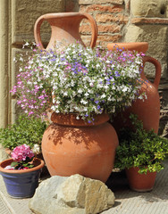 multicolor lobelia flowers in terracotta  vintage vases