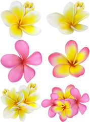 Beautiful gift card with yellow and pink plumerias