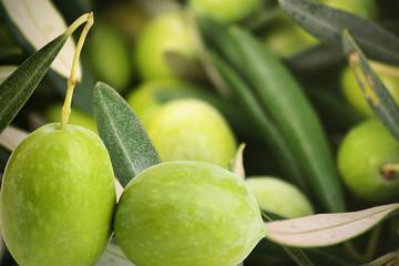 olive verdi rami e foglie