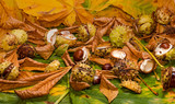 conker and leaves