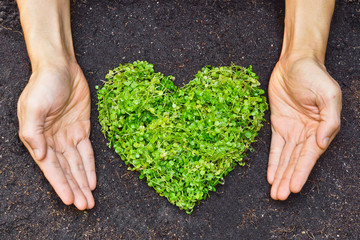 hands holding green heart shaped tree