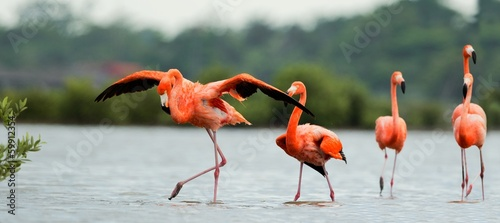 Foto op Canvas Flamingo The flamingos walk on water.