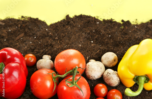 Vegetables on ground on color background