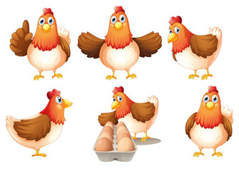 A group of fat hens