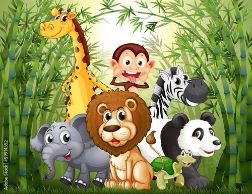 A bamboo forest with many animals - 59914352