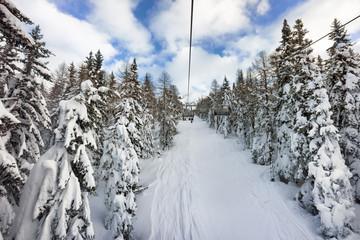 snow on trees on ski slope, Italy