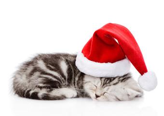 sleeping scottish kitten with santa hat. isolated on white