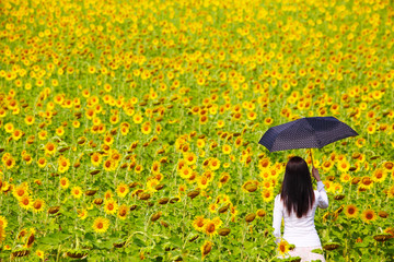 Young Woman with Umbrealla in Sunflower Field