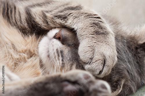 sleeping cat - 59919196