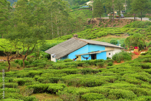 house in tea plantation