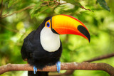 Colorful tucan in the aviary for adv or others purpose use poster