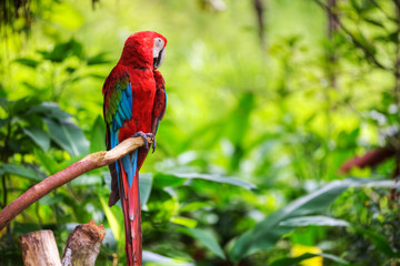 colorfulmacaw sitting in a tree