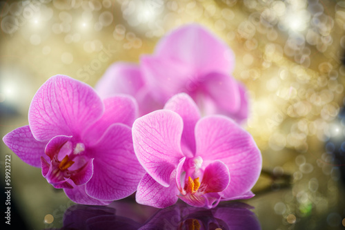 beautiful branch Phalaenopsis