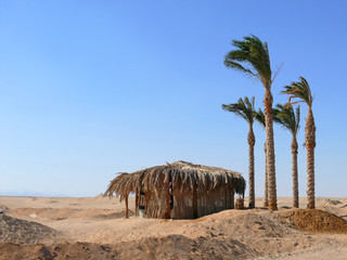 Shelter of palm leaves in the desert.