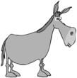 Obrazy na płótnie, fototapety, zdjęcia, fotoobrazy drukowane : Gray donkey
